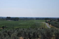 Michele_Satta_vineyards1