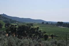 Michele_Satta_vineyards2