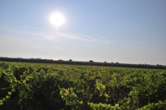 Michele_Satta_vineyards3